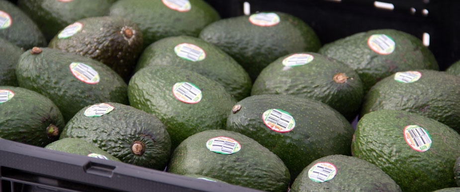 McDaniel Avocados Packing